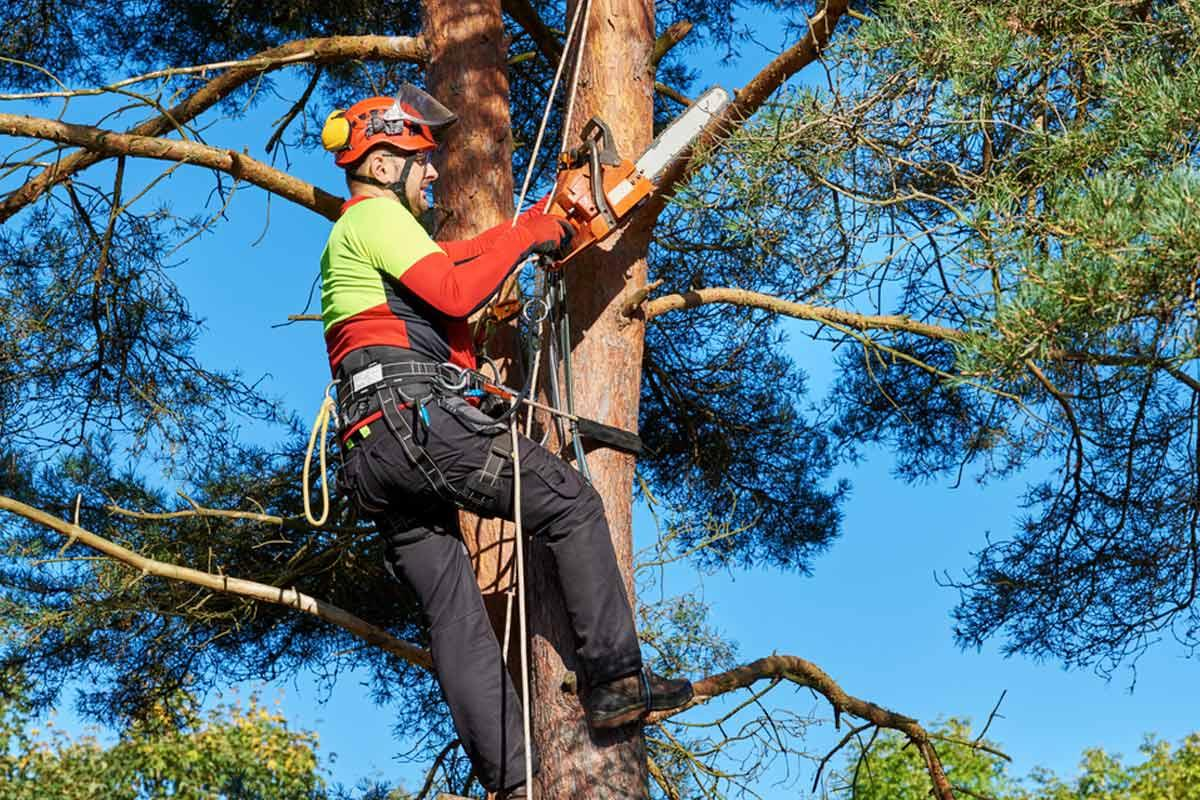 2hrs of Tree Services by 3 Workers incl. Removal of Wood & Green Waste