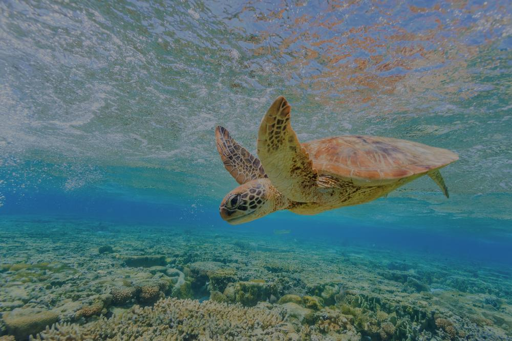 Tropical North Queensland - Luxury Escapes MO