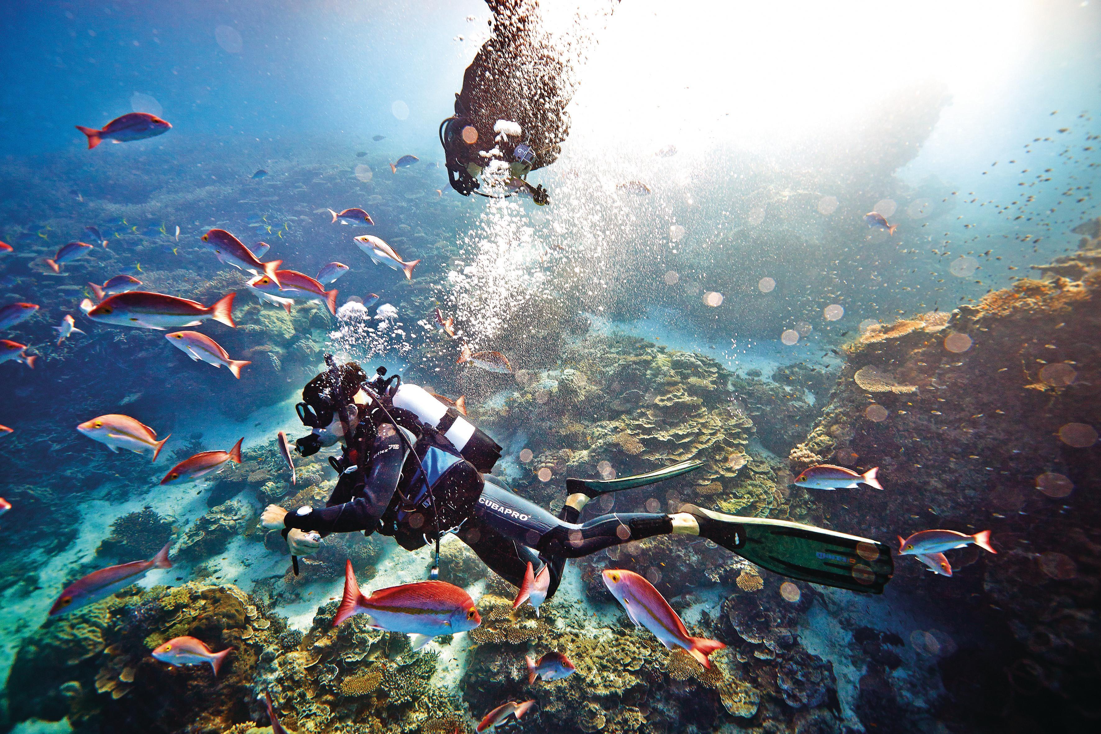 Heron Island dive