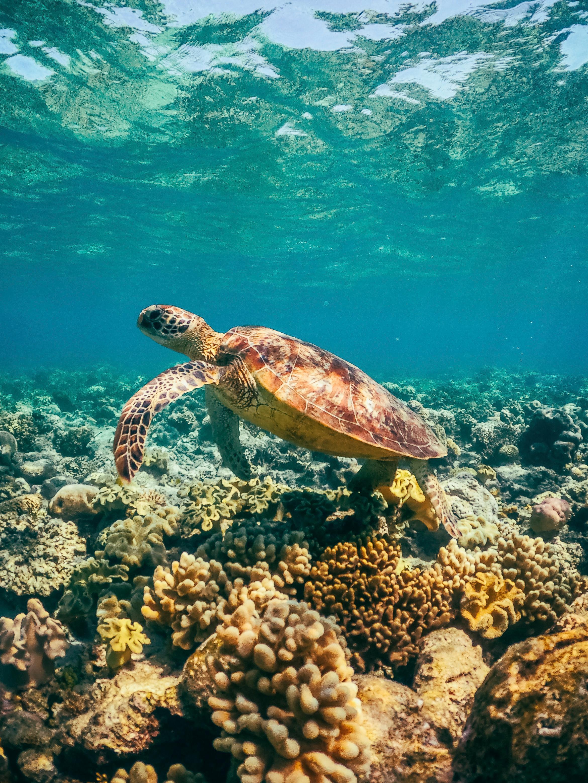 Sailaway tours - turtle