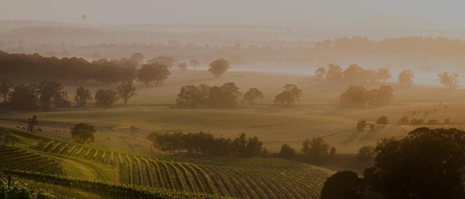 Luxury Escapes Guide to the Hunter Valley