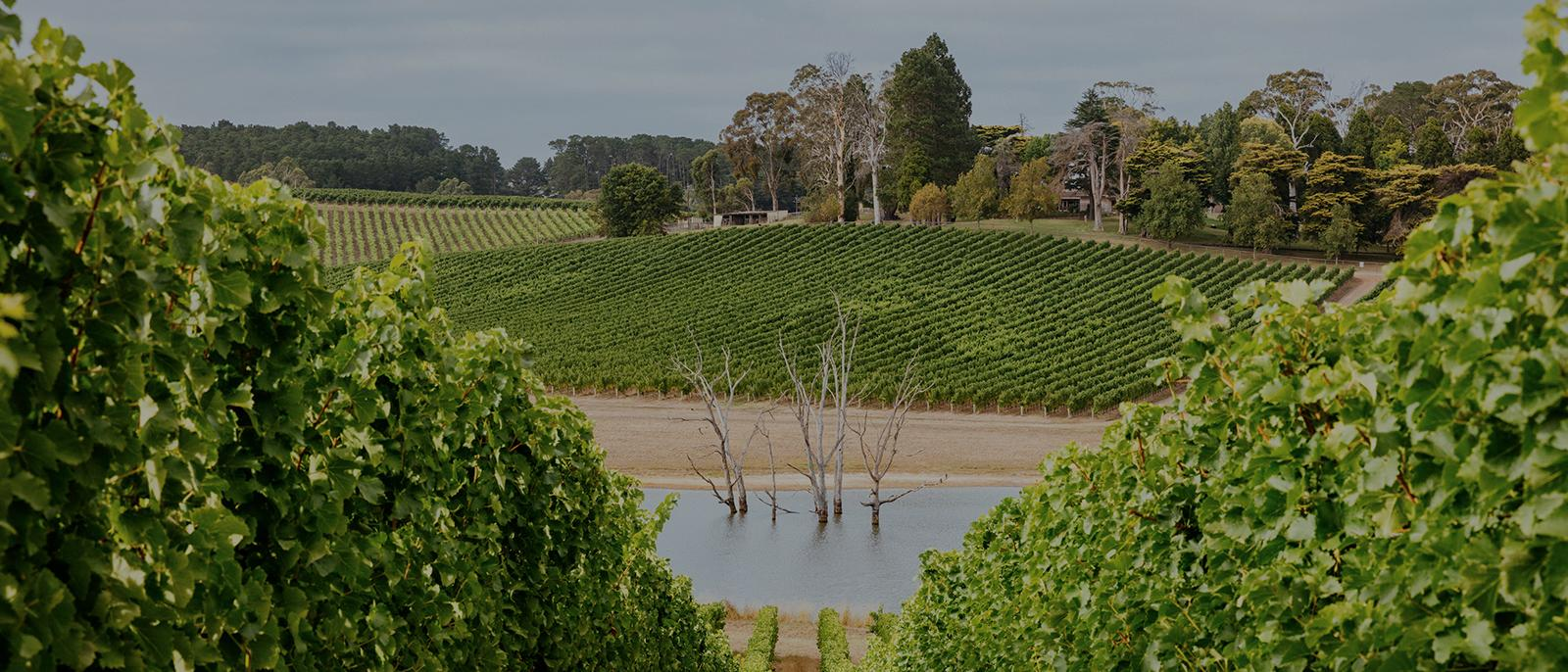 Luxury Escapes Guide to the Adelaide Hills