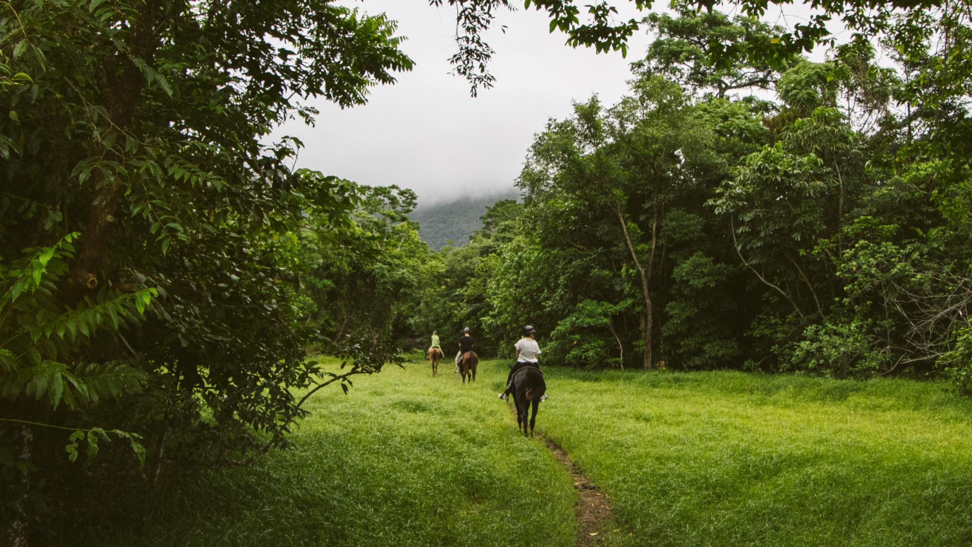 Horse riding through the rainforest Cape Tribulation