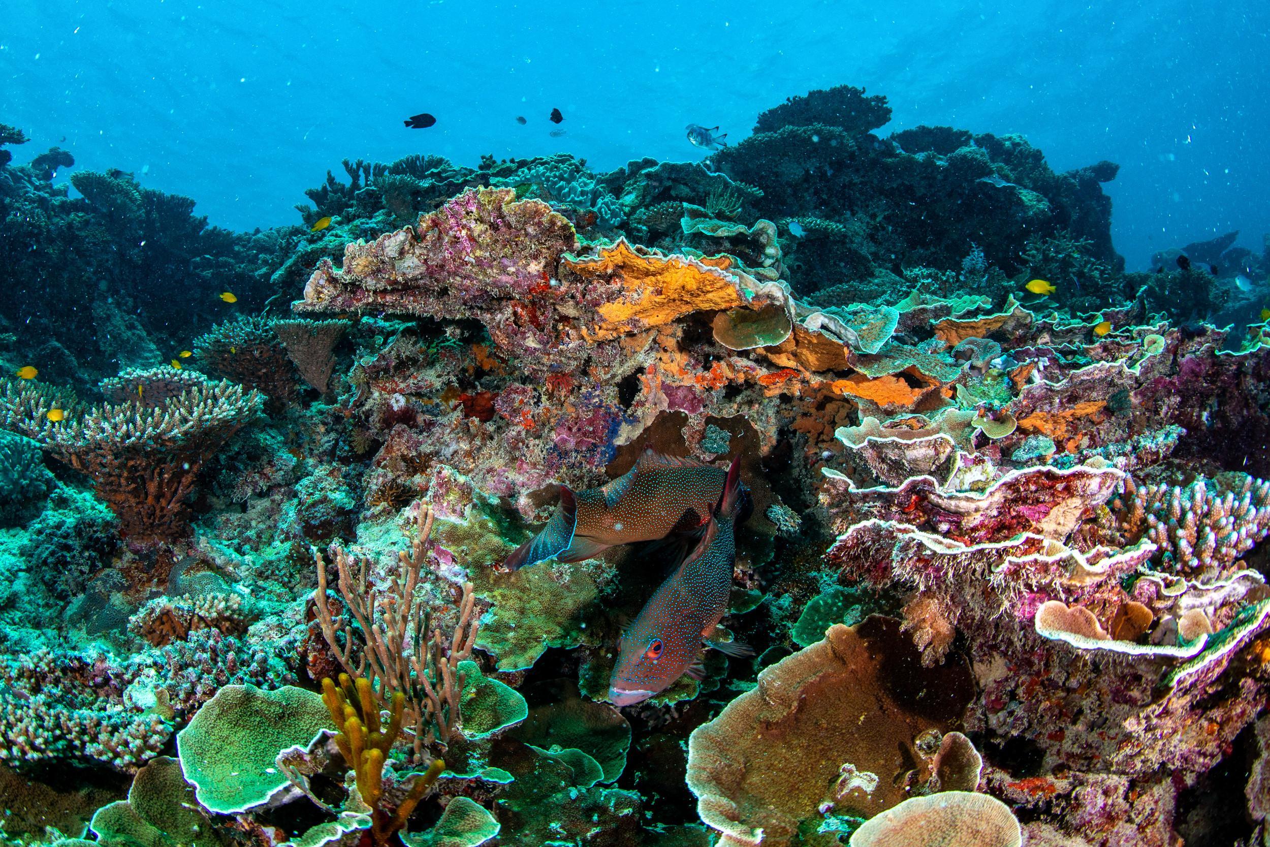Wilson Island snorkelling