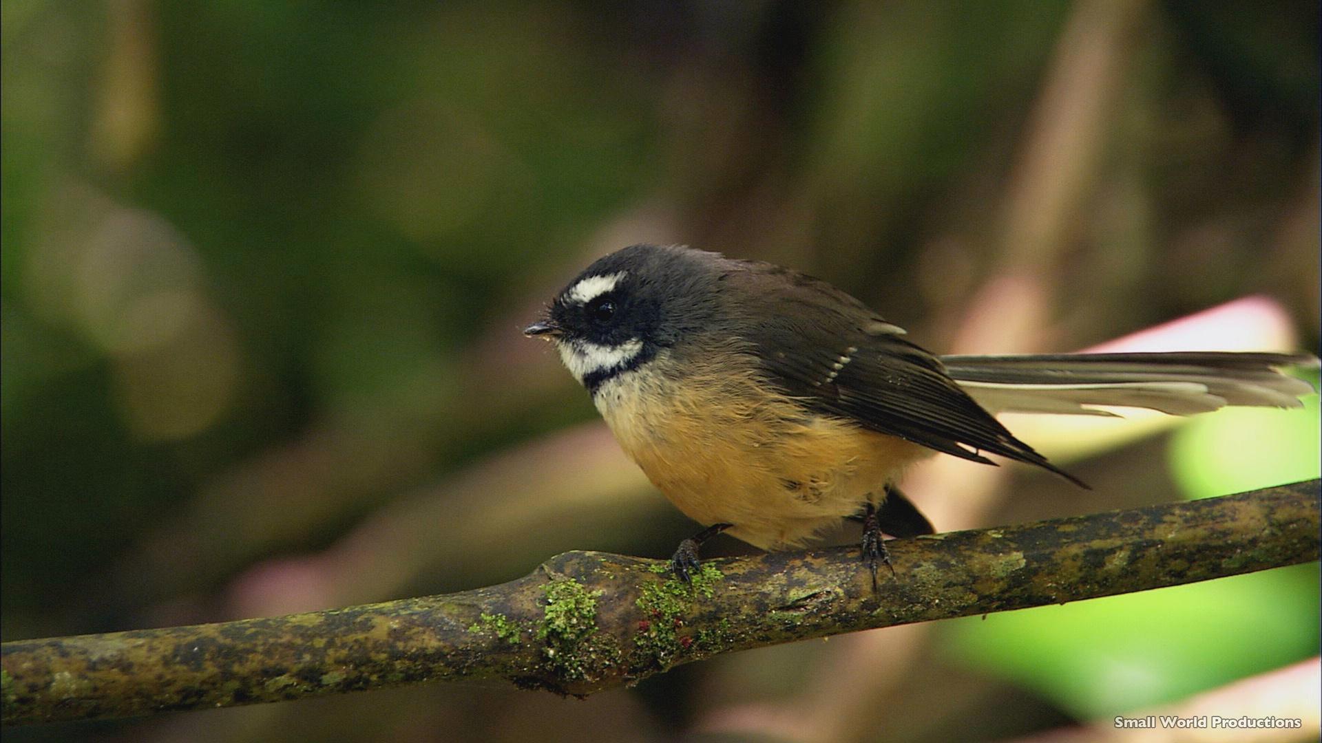Russell birdlife