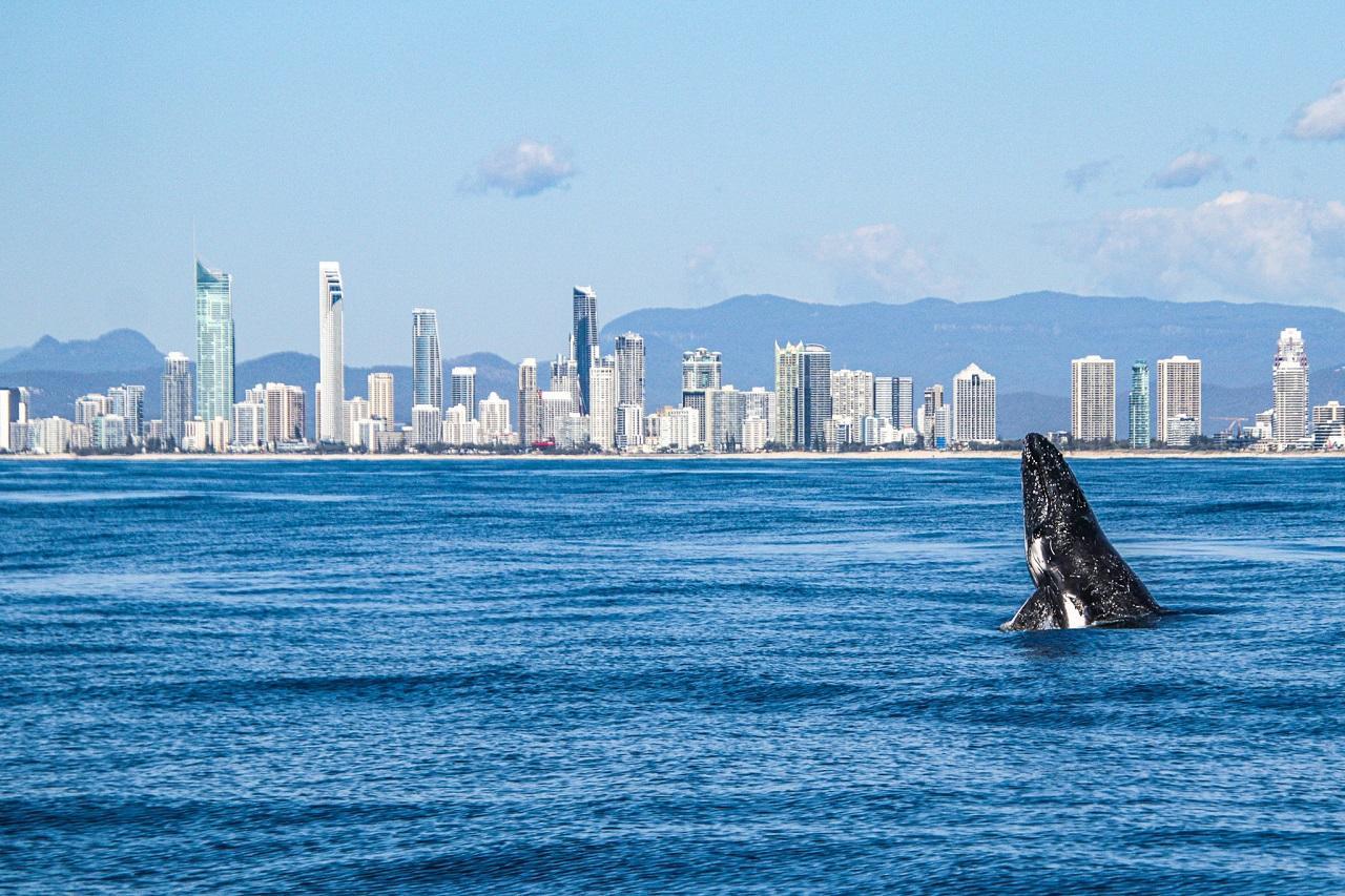 Sea World Whale Watching Cruise
