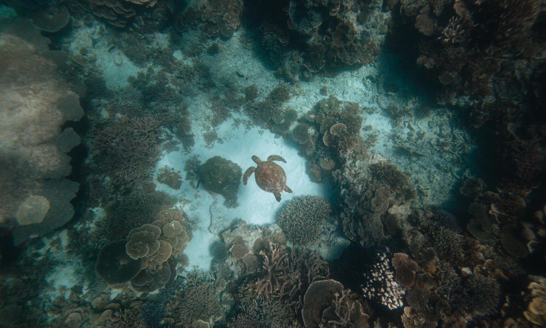 Turtle dive on Lady Elliot Island