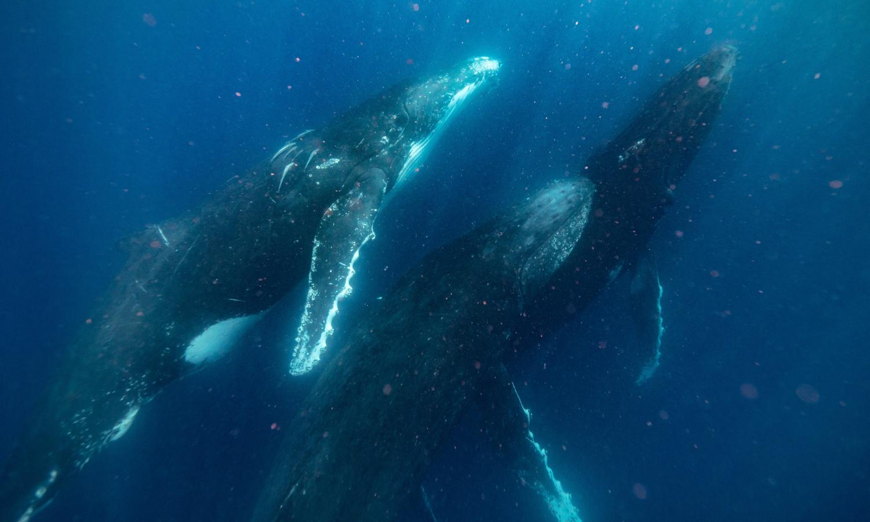 Sunreef swim with whales